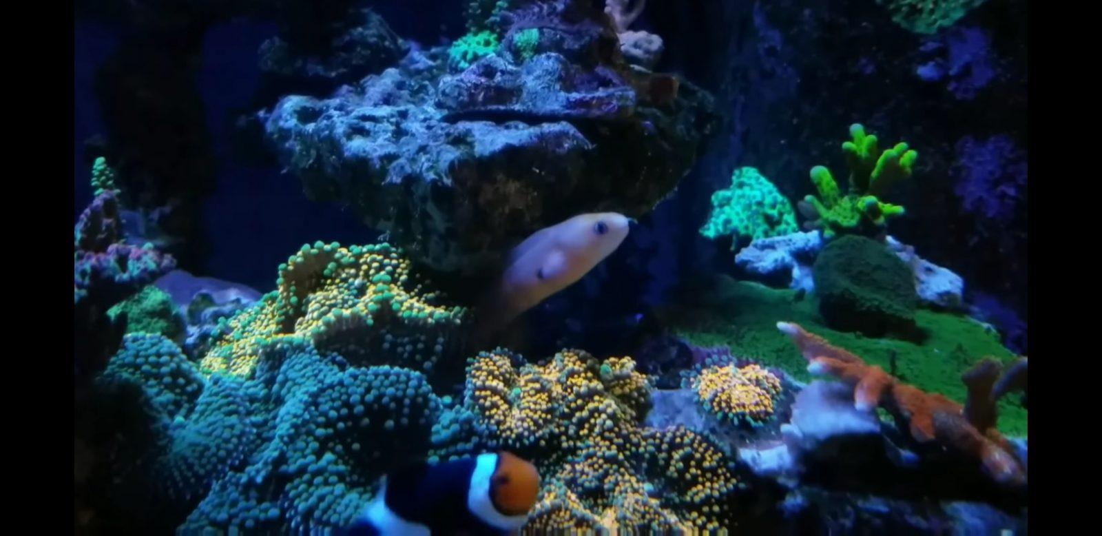 美丽的坦克珊瑚照明