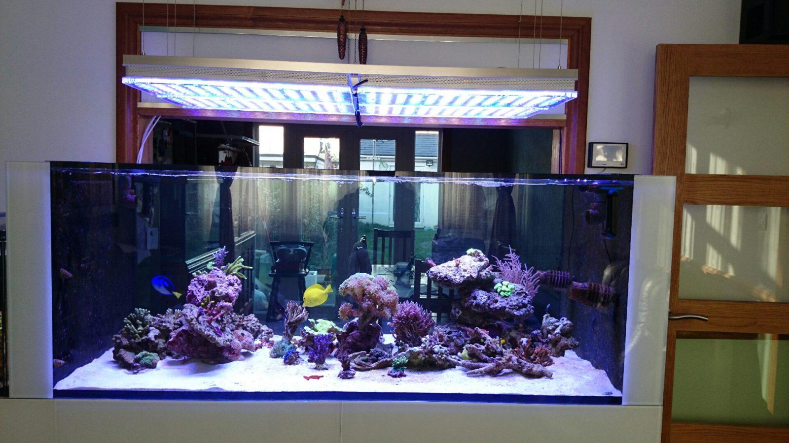 pencahayaan LED pertumbuhan karang terbaik 2020