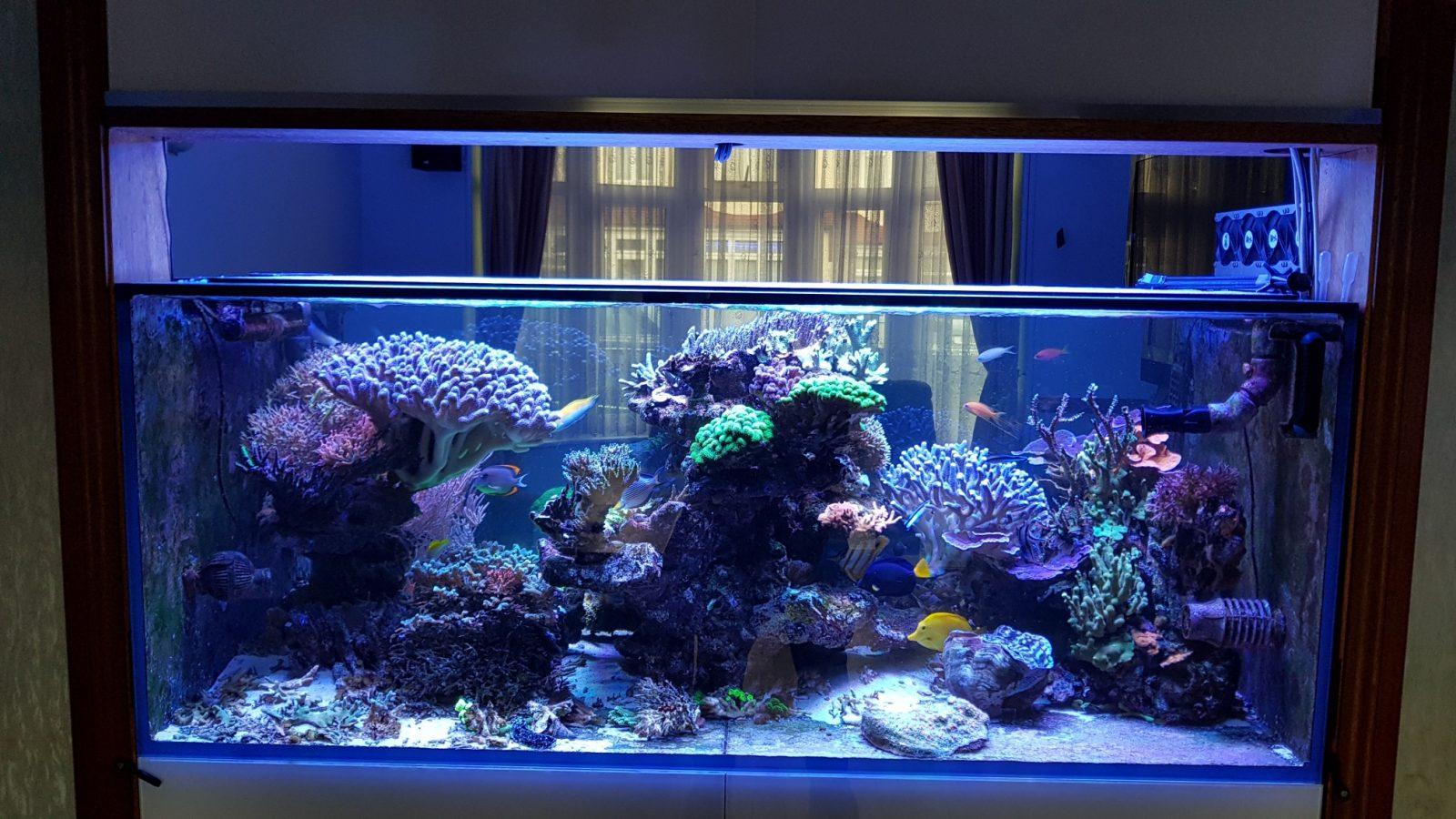 akuarium kerajaan terumbu yang indah