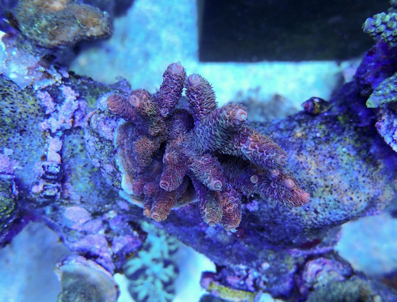 pencahayaan tangki karang air masin terbaik