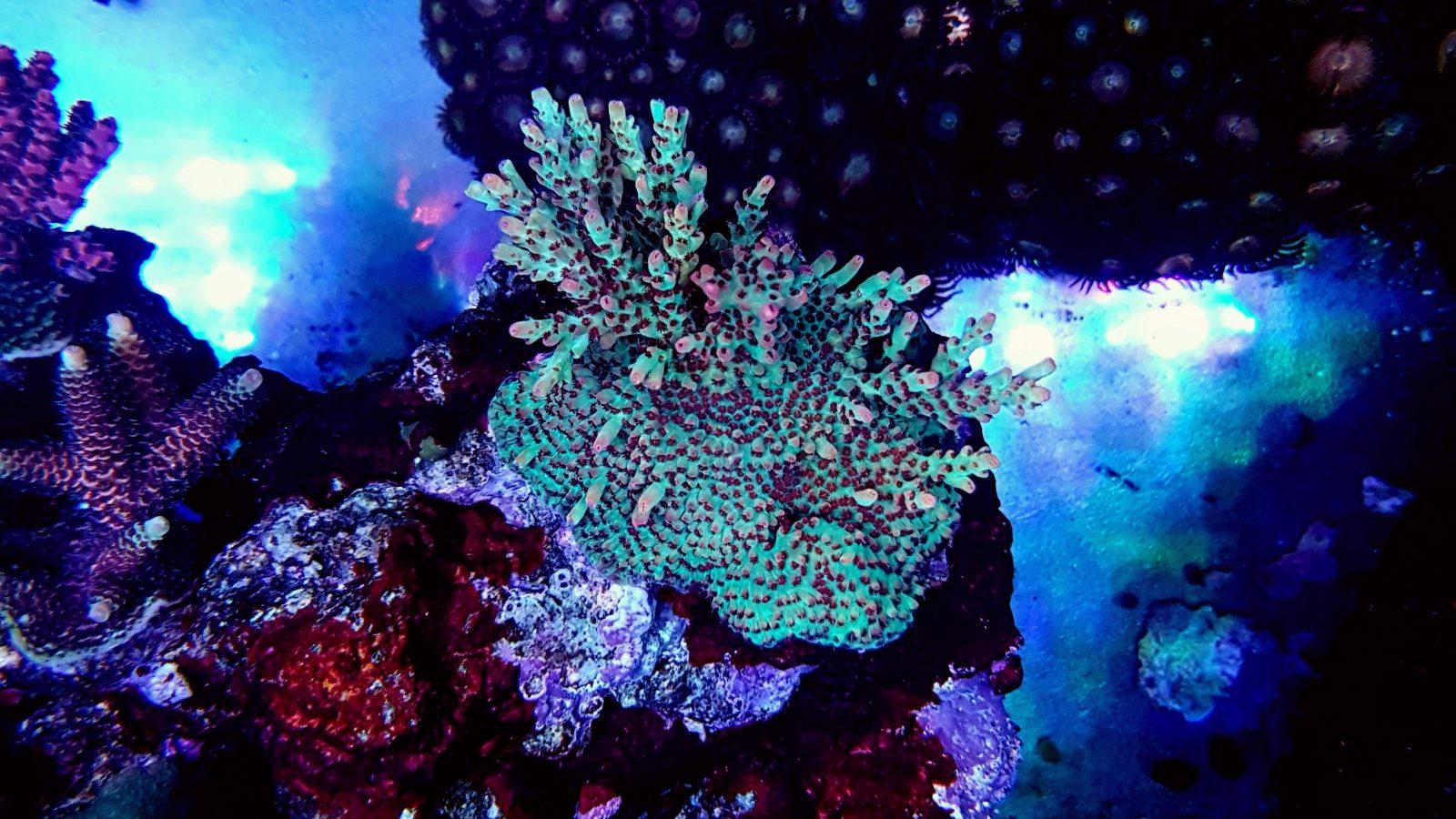 visão noturna belo recife tanque corais