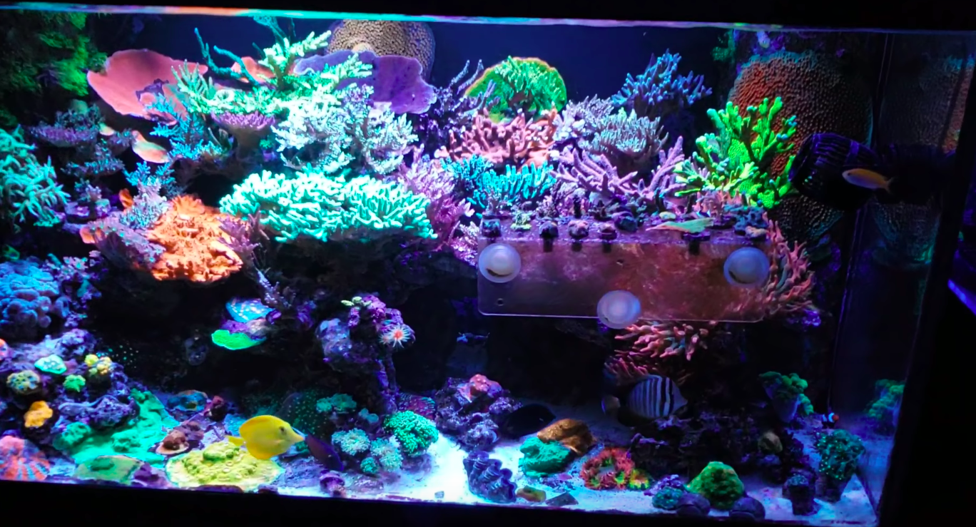 সেরা রিফ Aquarium LED আলো