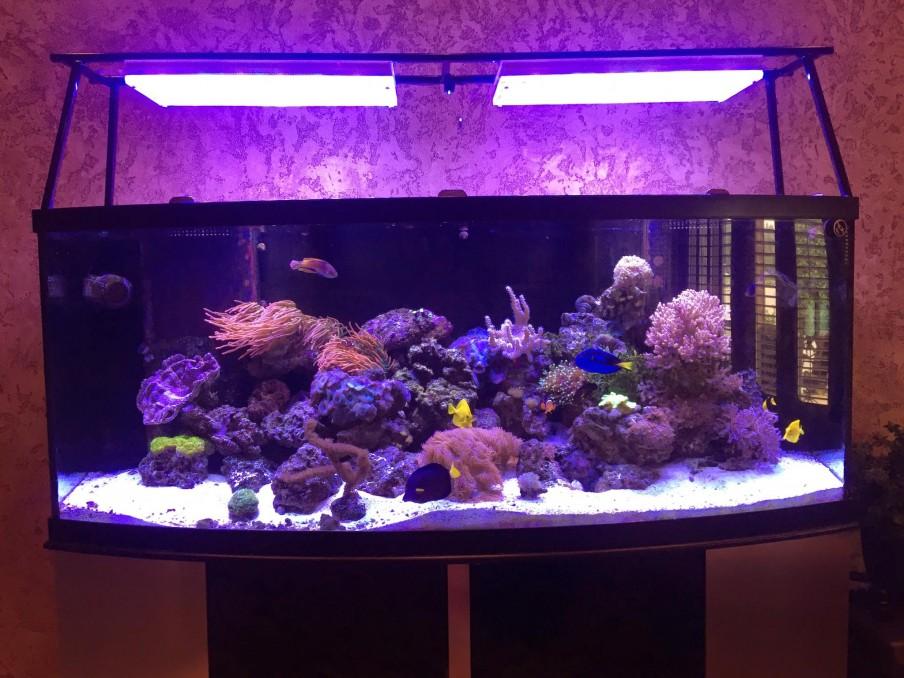 luzes coloridas de corais de recife