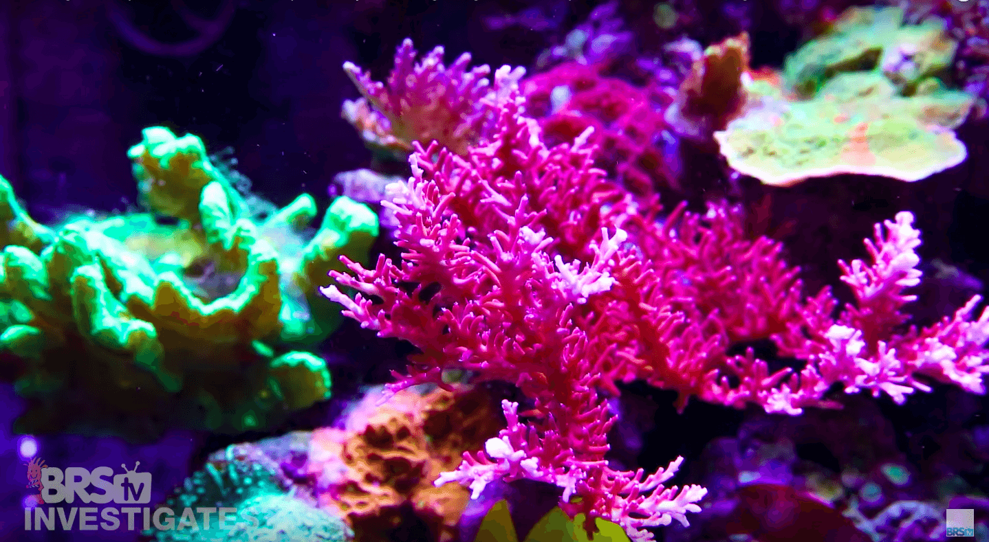 aquarium lighting for beautiful coral colors