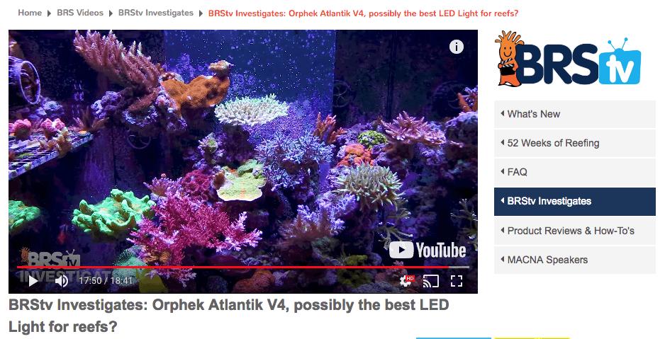 lampu karang akuarium karang kanthi warni