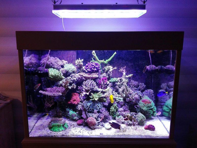 أفضل الشعاب المرجانية للدبابات الإضاءة