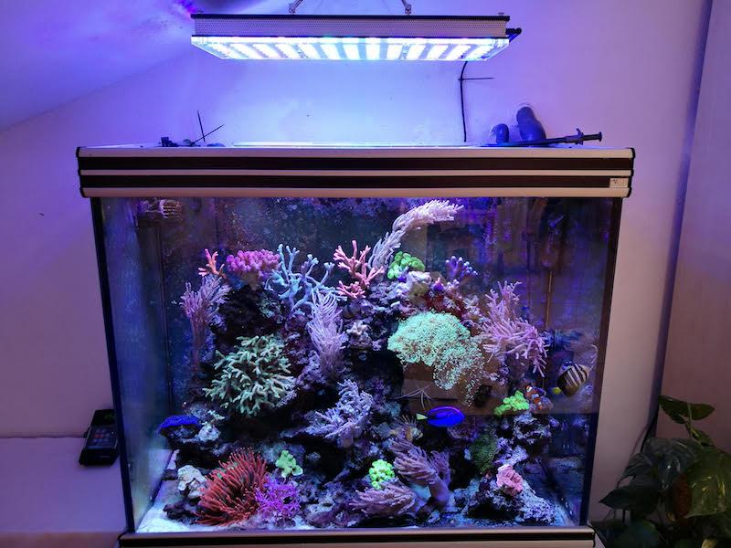 أعلى إضاءة خزان الشعاب المرجانية الملونة