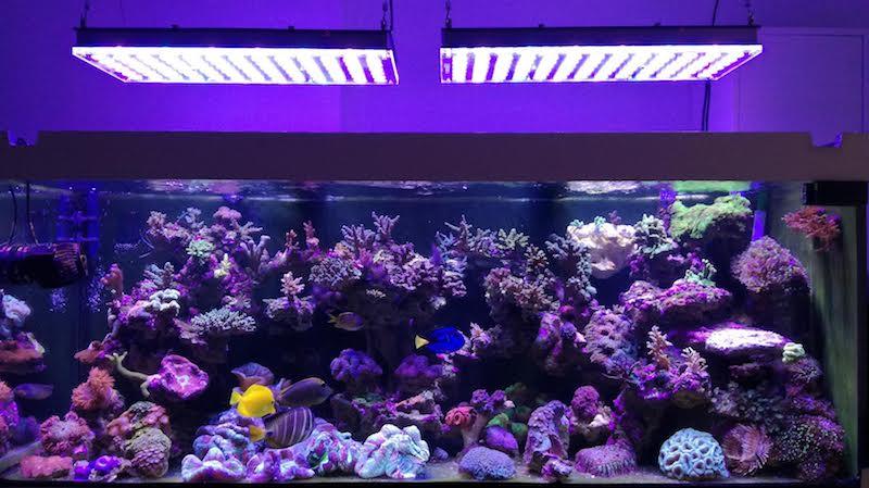 migliore luce a led per acquario di barriera