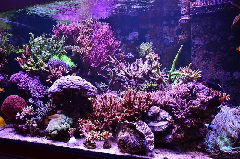 migliore illuminazione dei coralli dell'acquario della scogliera