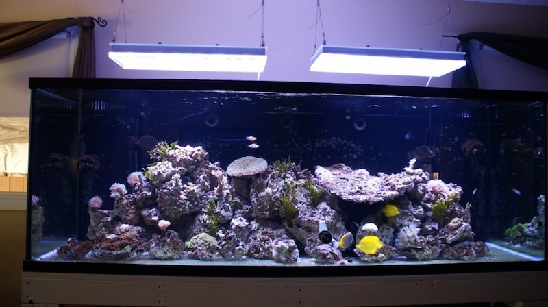 illuminazione orphek per un bellissimo acquario di barriera corallina
