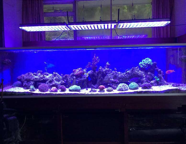 potente acquario leggero atlantik v4