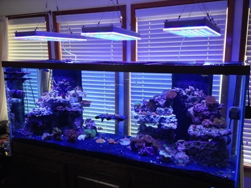 atlantik v4 أفضل ضوء حوض السمك في المياه المالحة