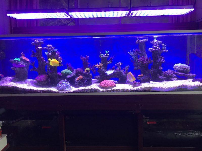 illuminazione dell'acquario per pop corallo