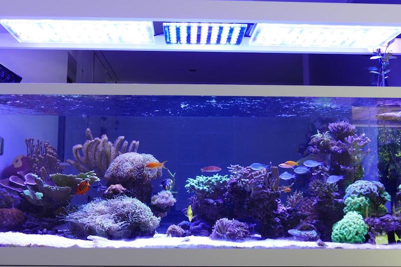 top coral pop led-verlichting