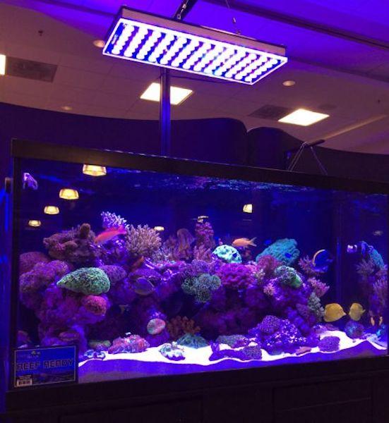 أفضل حوض السمك المرجاني LED 2020