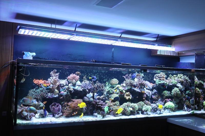 أضواء LED أعلى للشعاب المرجانية الملونة