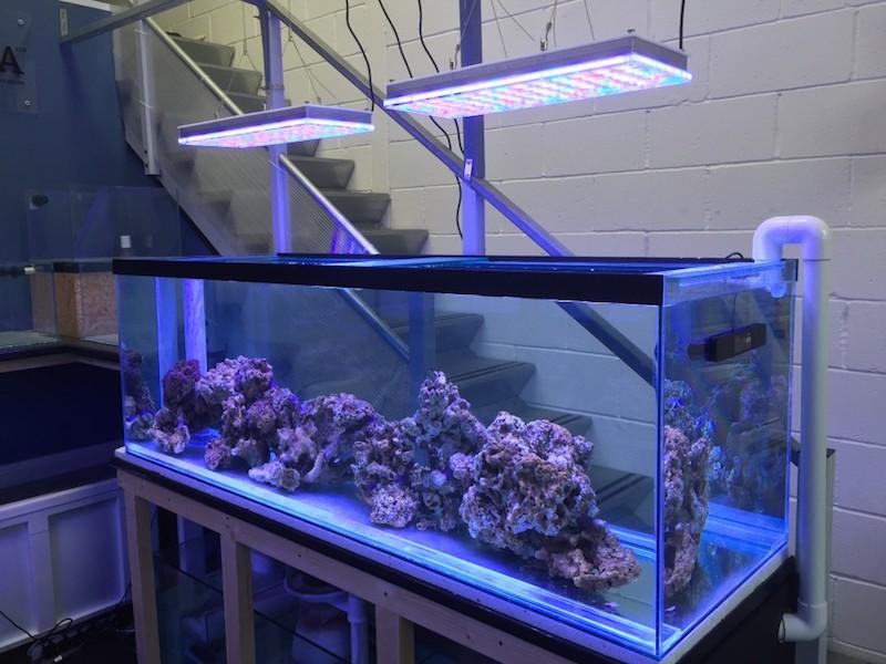 نمو المرجان أفضل ضوء 2020