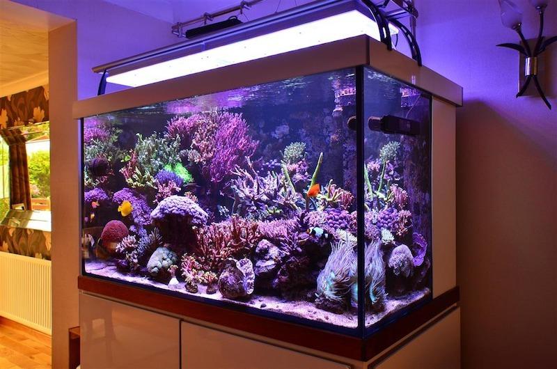 illuminazione dell'acquario di alta qualità 2020
