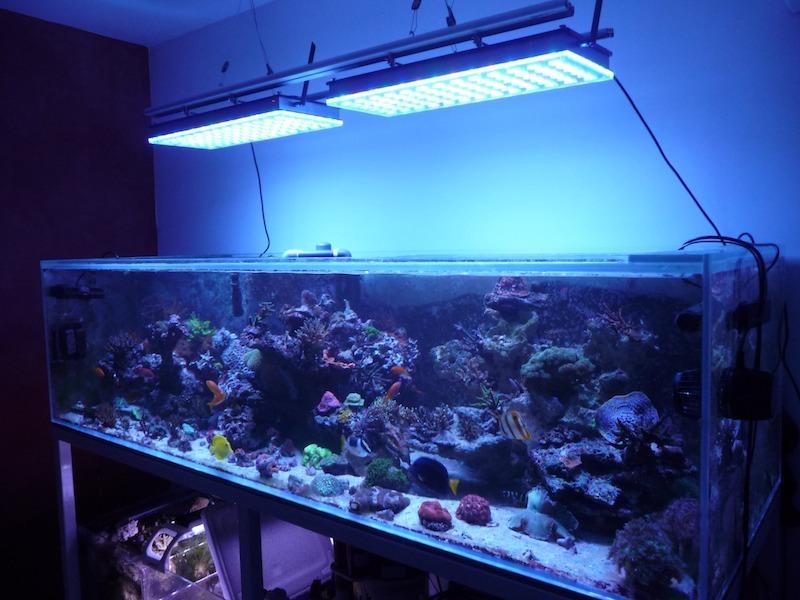 2020 أفضل إضاءة حوض السمك في المياه العميقة