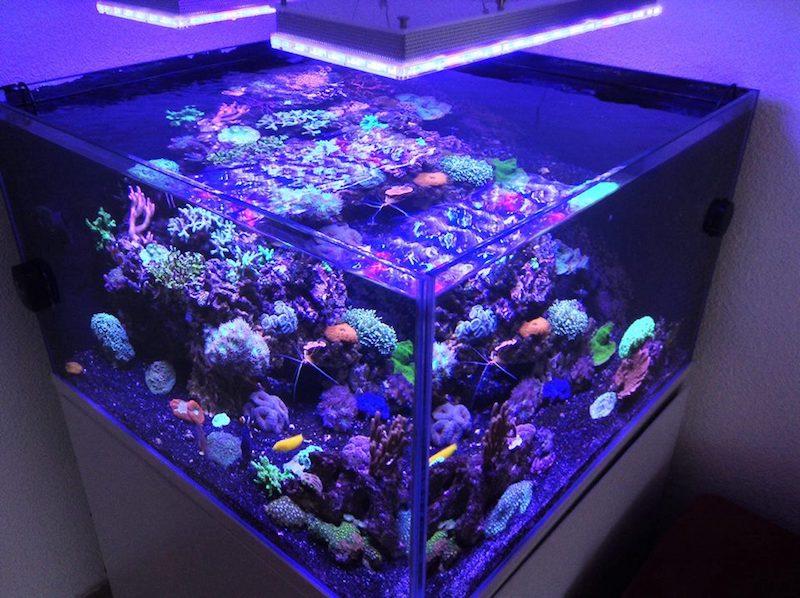 bellissimi coralli dell'acquario di barriera corallina
