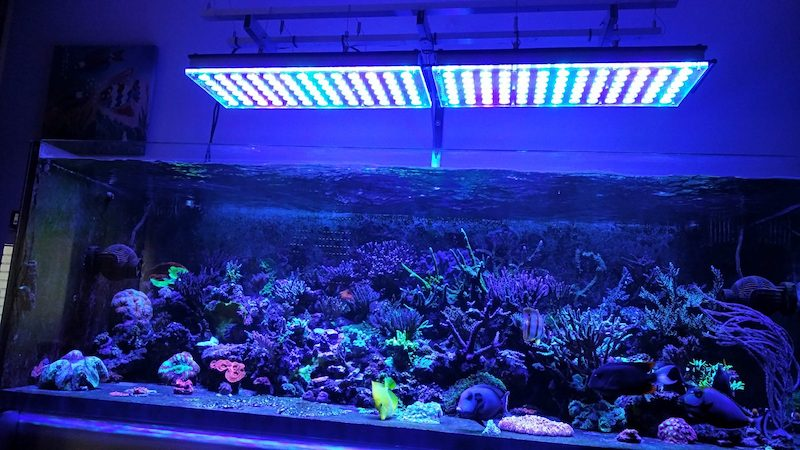 إضاءة الشعاب المرجانية LED 2020