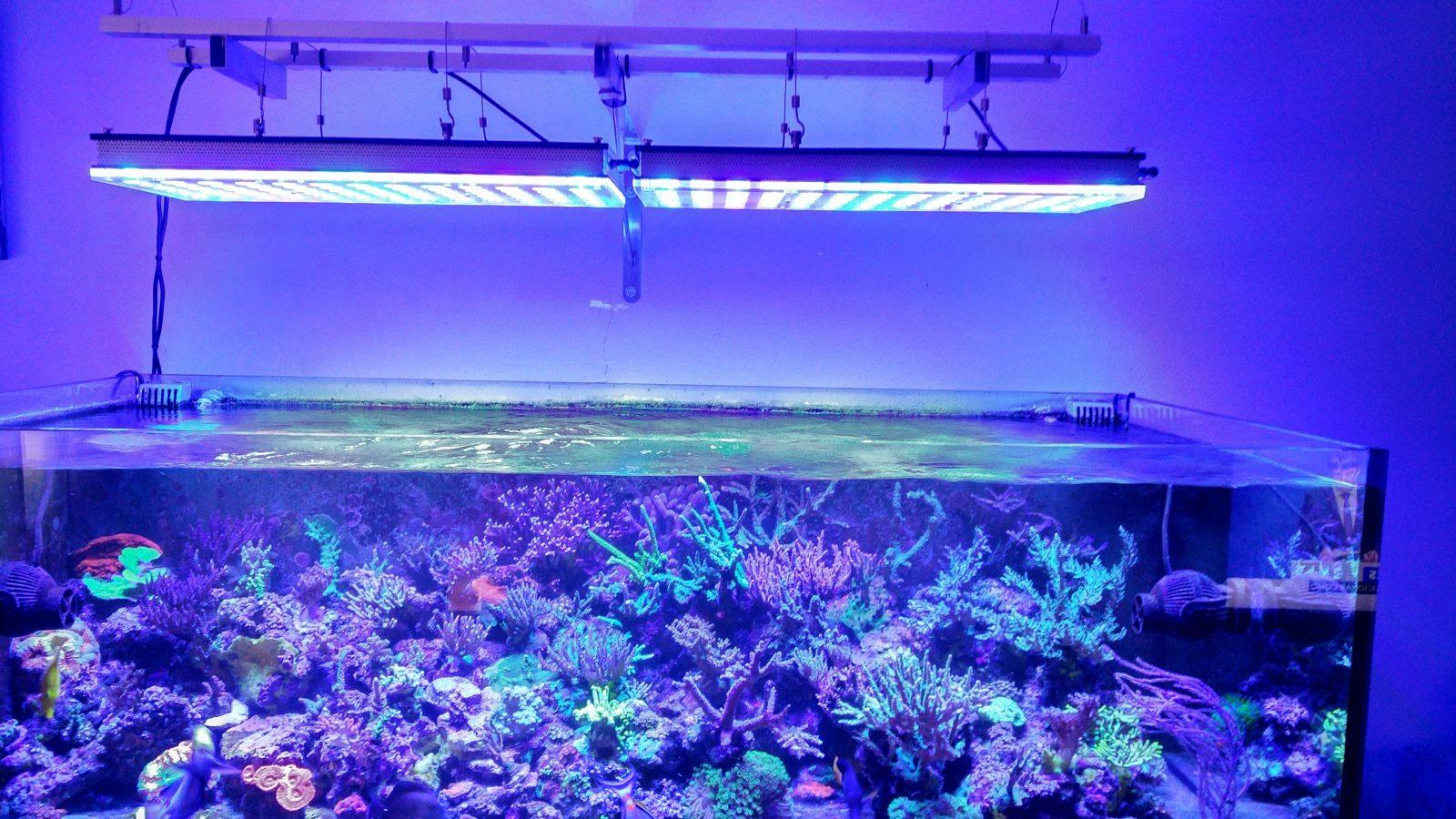la crescita dei coralli ha portato l'illuminazione