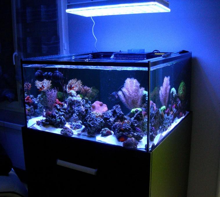 atlatnik v4 melhor luz do aquário