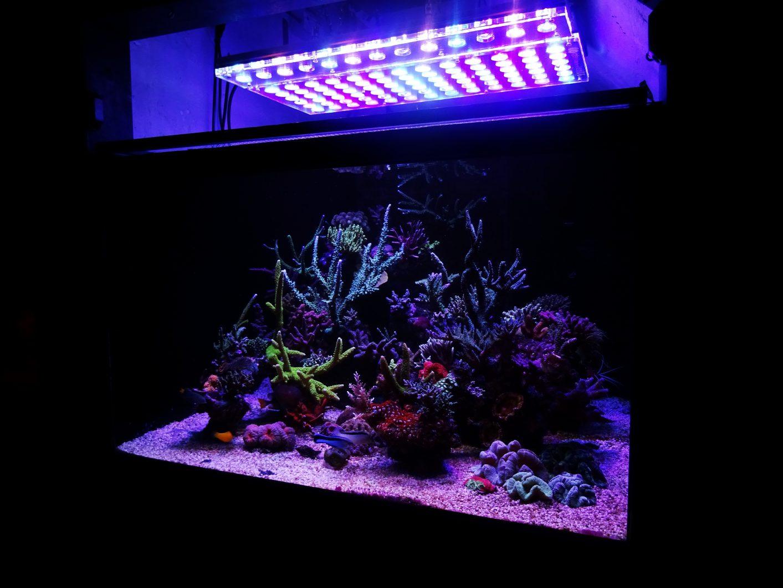 éclairage de réservoir pop corail