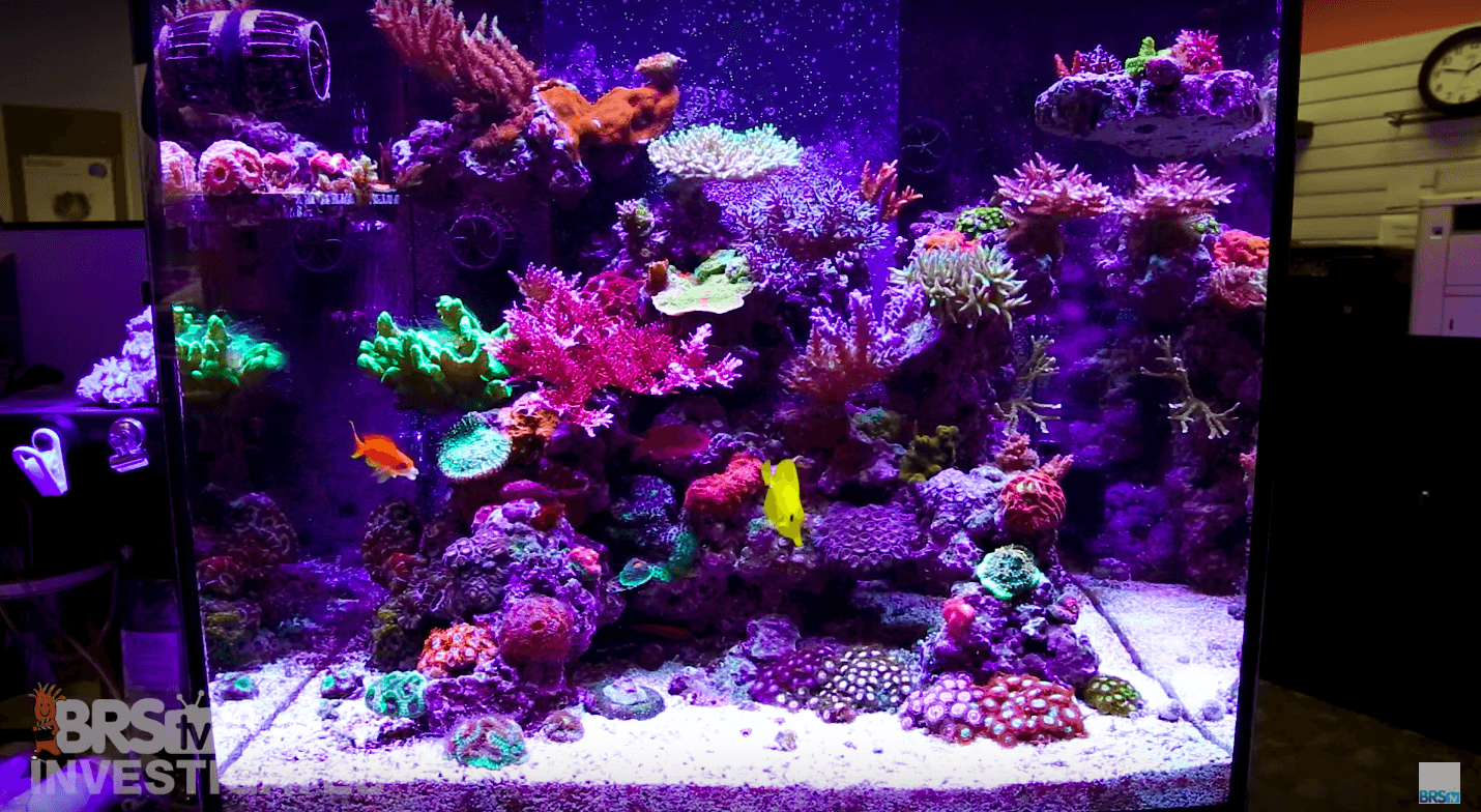 best reef corals tank led lighting