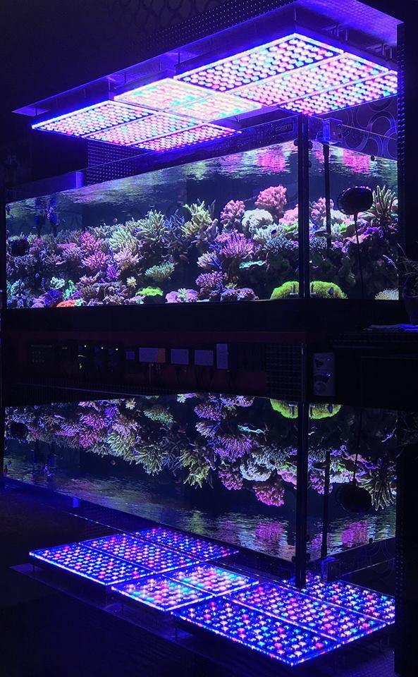 melhor iluminação led para crescimento de corais