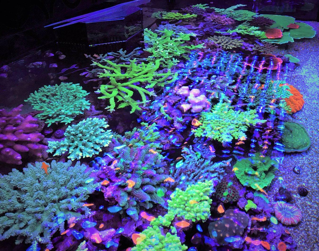 arrecifes de coral bajo atlantik v4