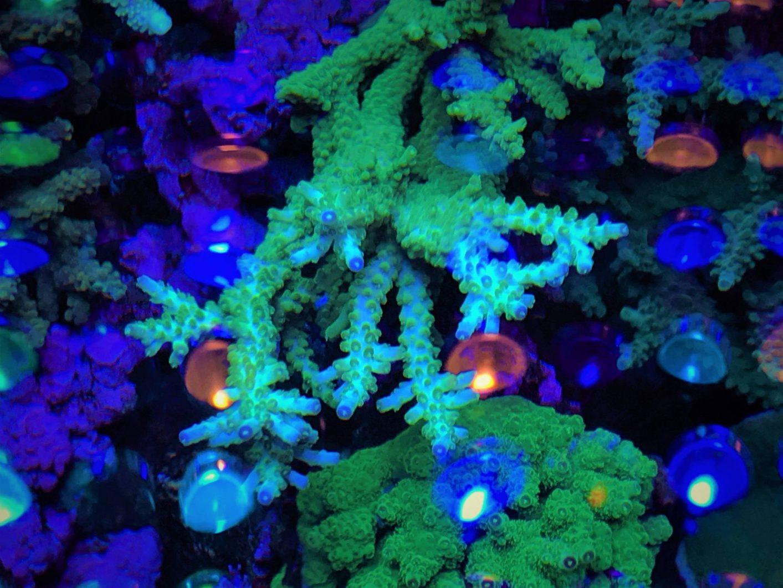 luces del tanque de corales de arrecife