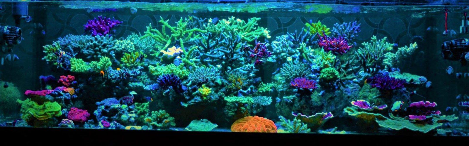 bästa akvarium LED-ljus 2020