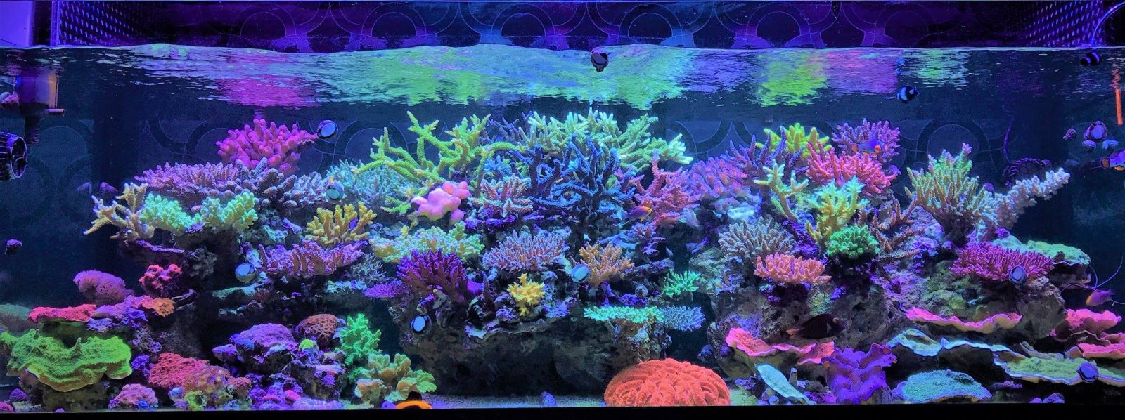orphek beste aquariumverlichting 2020