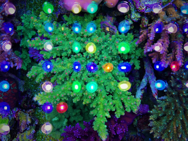 mejor iluminación de coral de acuario de arrecife