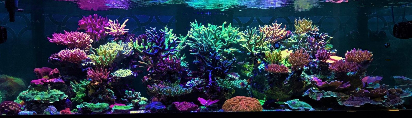bela iluminação do tanque de coral