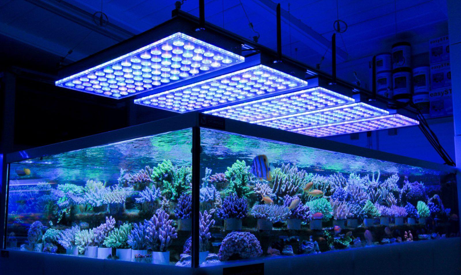 oświetlenie zbiorników publicznych rafy