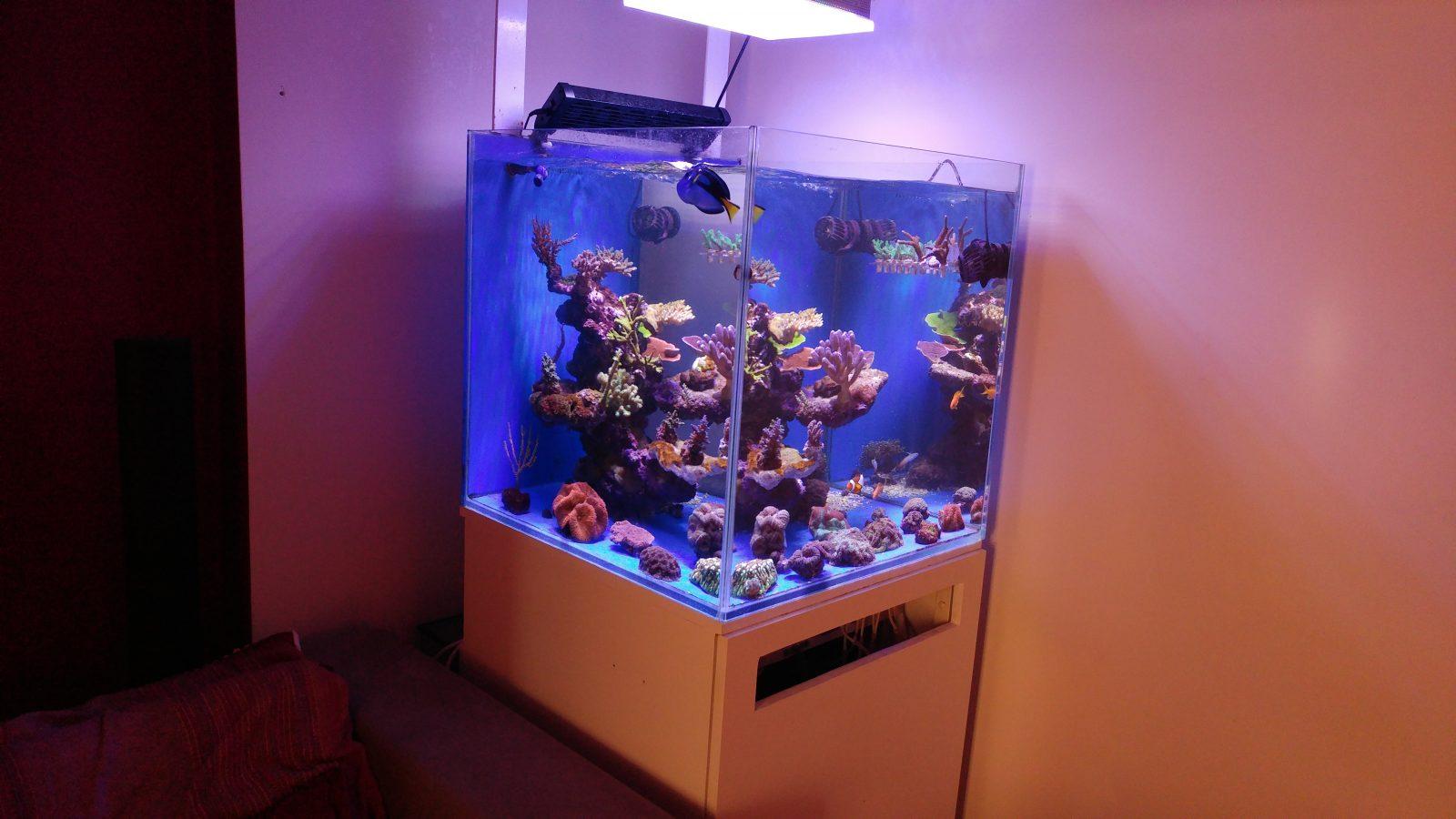 أضواء خزان المياه المالحة الشعاب المرجانية