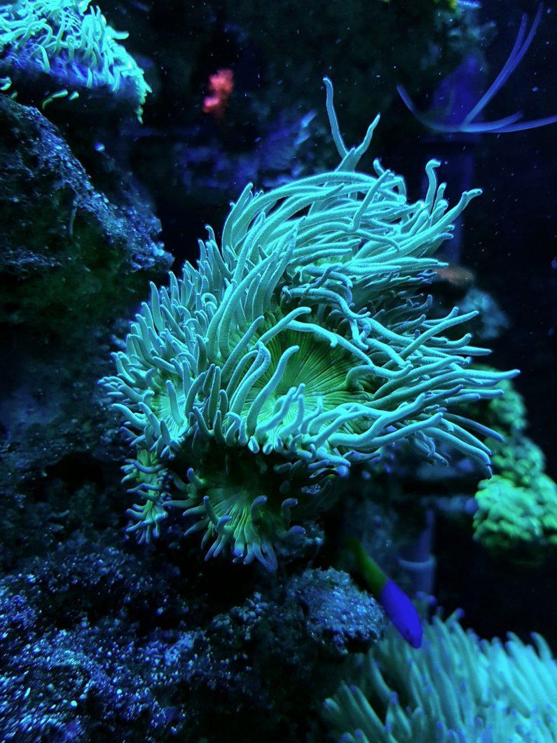 luces del tanque coral pop