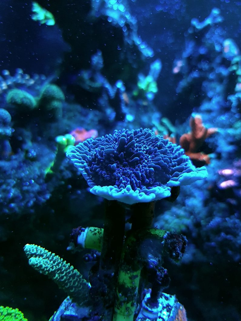 arrecife acuario corales luces