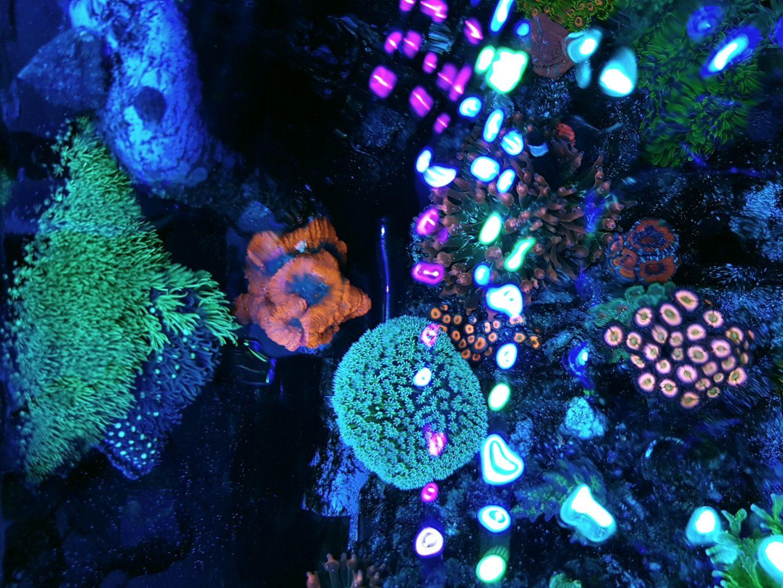 tanque de arrecife mejor iluminación led