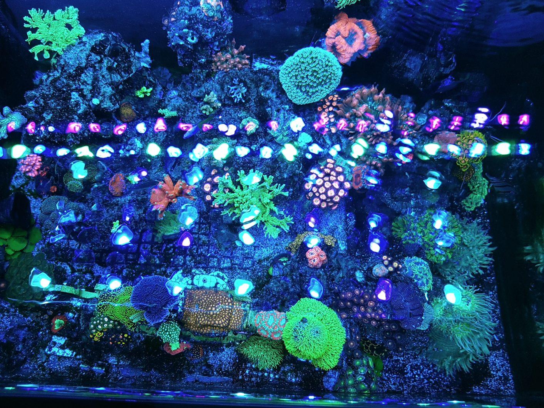 mejor solución de luz de acuario