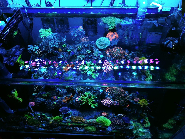 Luz LED para tanque de agua salada