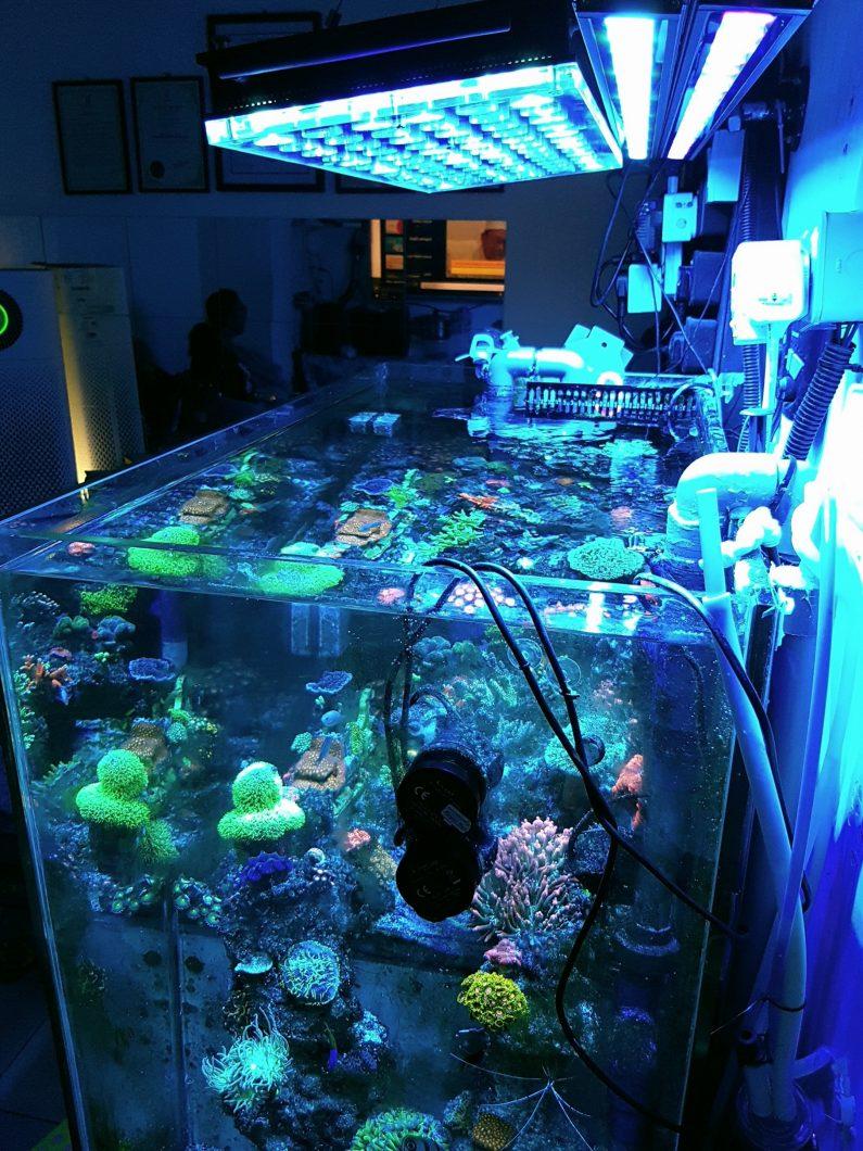 अनाथ चट्टान मछलीघर एलईडी प्रकाश व्यवस्था