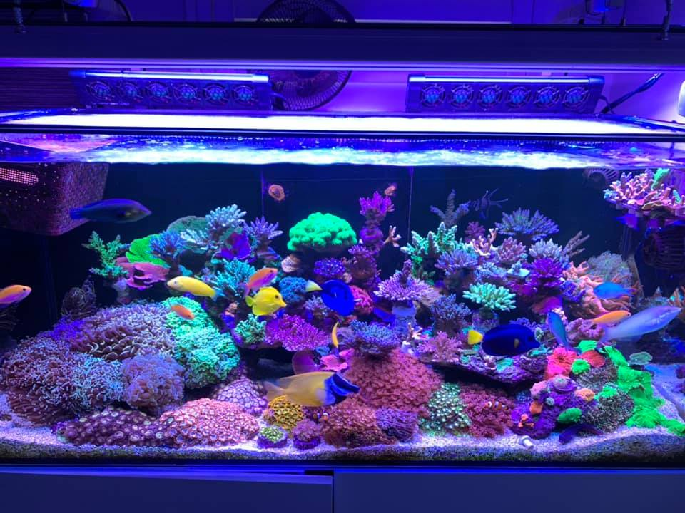 Orphek OR3 LED Bars over reef tank