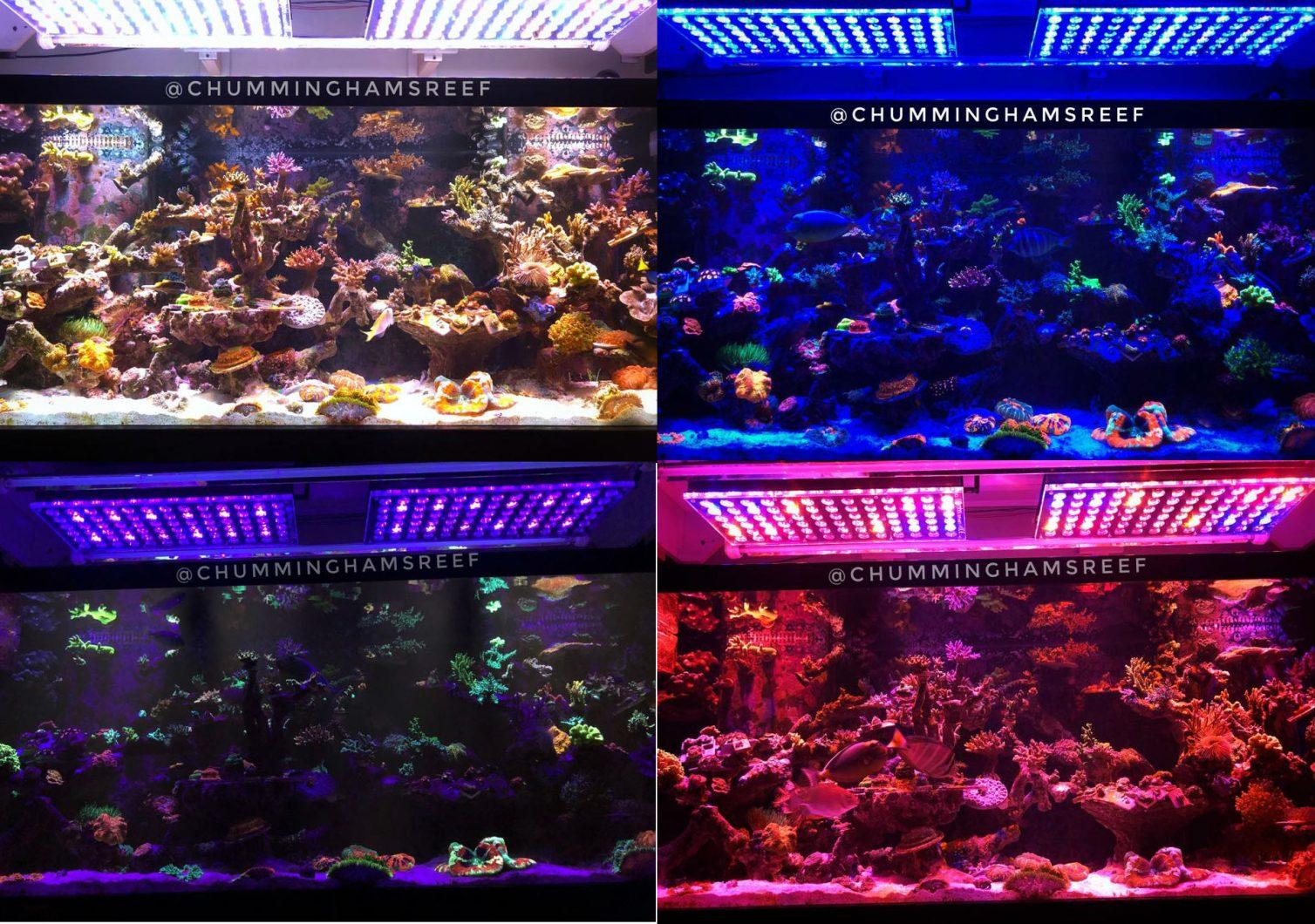 maior espectro de iluminação do aquário