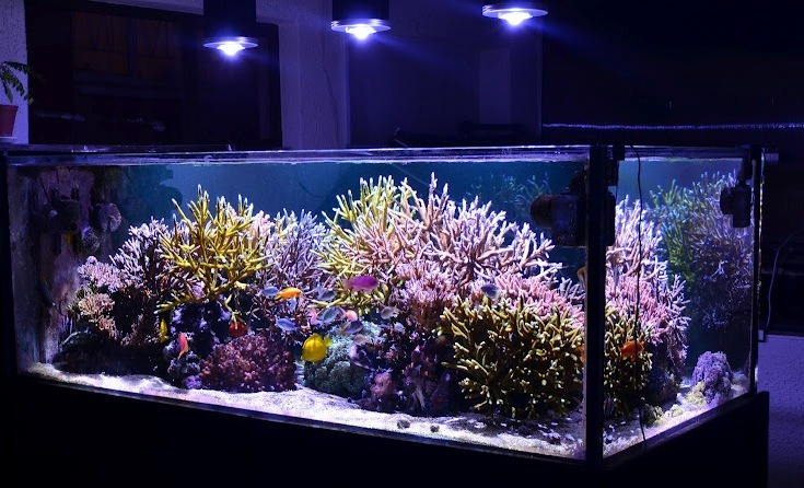 LED aquarium corail