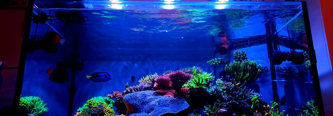 Orphek-OR3-led-bar-reef-aquarium-coral-color-pop
