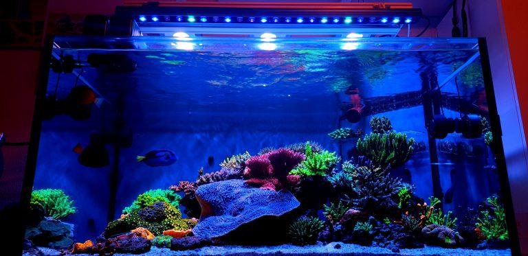 Orphek-OR3-led-bar-reef-aquarium-coral-color-pop
