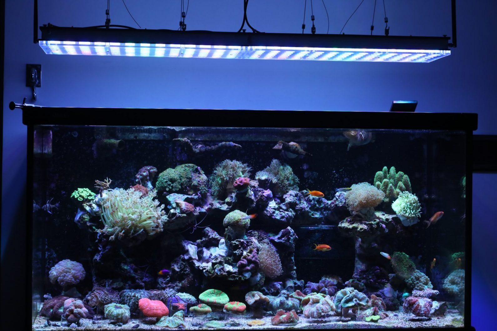 illuminazione a led per il bellissimo regno dei coralli